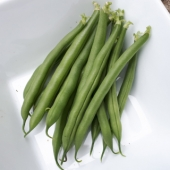 Bush Bean 'Sunray'
