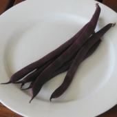 Purple King Bean Pods