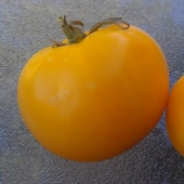 Jubilee Yellow Tomato